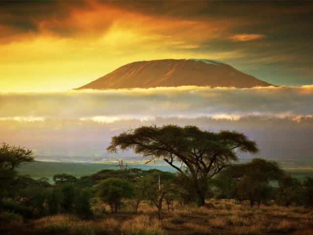Nejvzácnější zvířata Keni, aneb poznejte skvost Keňského safari