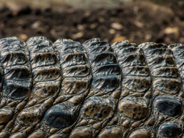 Kam na výlet? Jeďte za krokodýly do Protivína!