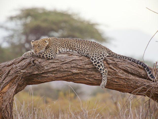 Toužíte po opravdovém dobrodružství? Safari v Africe vám ho poskytne!