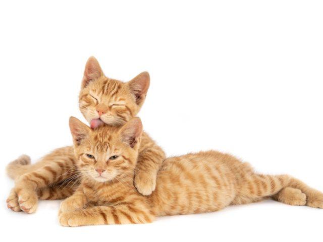 Jak ovlivňuje čerstvá tráva kočičí zdraví?
